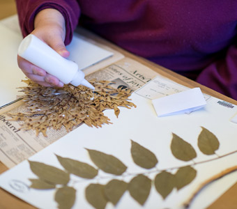 Growing and cataloguing knowledge at TTU herbarium