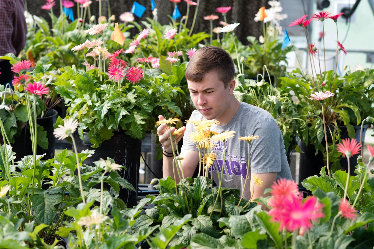 A student inspects flowers in the greenhouse