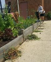 students caring for the Food Pantry garden