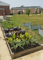 raised bed gardens at the Food Pantry garden